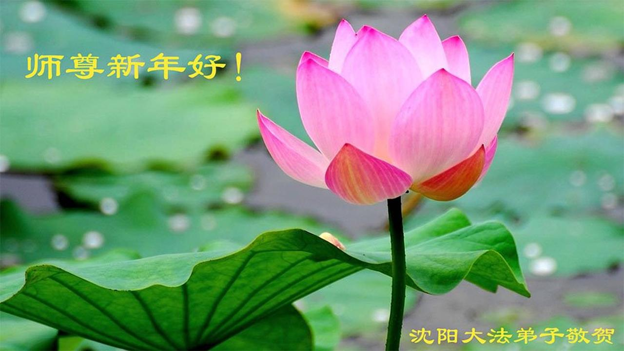 Falun Dafa Practitioners From Shenyang City Wish Revered Master A Happy Chinese New Year